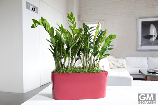 gigamen_Best_Houseplants01