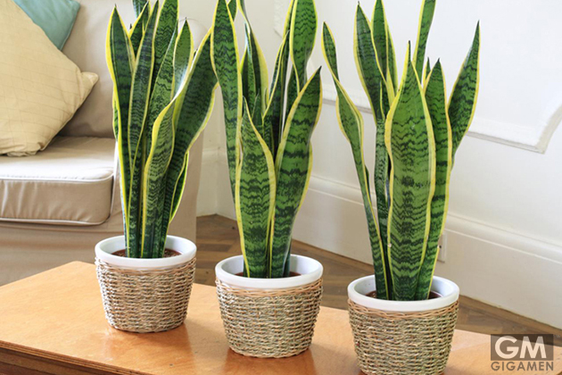 gigamen_Best_Houseplants02