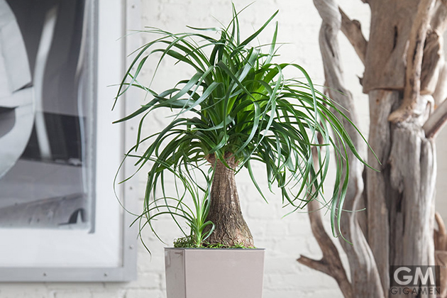 gigamen_Best_Houseplants03