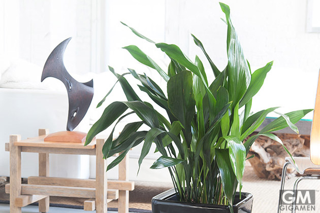 gigamen_Best_Houseplants06