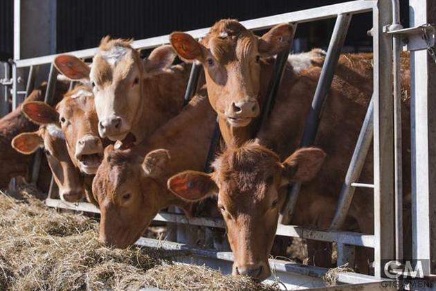 gigamen_California_a2_Milk01