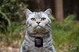 gigamen_wearable_cat_camera