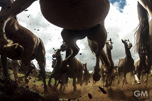 gigamen_Best_Wildlife_Photos01