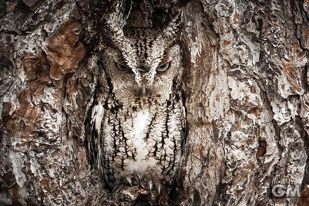 gigamen_Best_Wildlife_Photos02