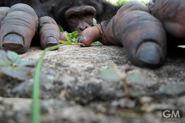 gigamen_Best_Wildlife_Photos04