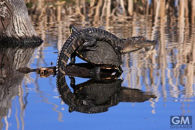 gigamen_Best_Wildlife_Photos07