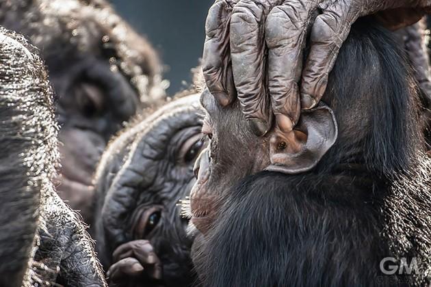 gigamen_Best_Wildlife_Photos08
