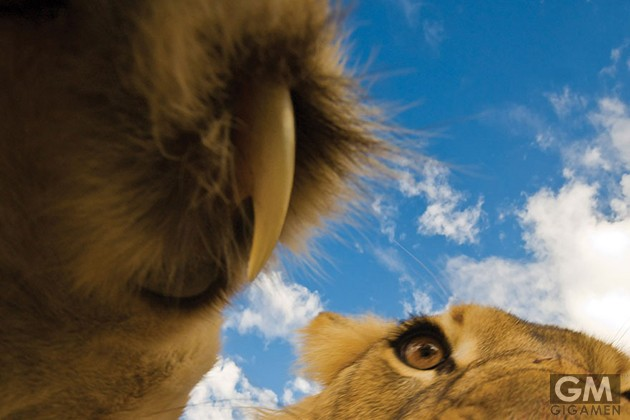 gigamen_Best_Wildlife_Photos10