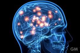 gigamen_Lies_Brain_Myth