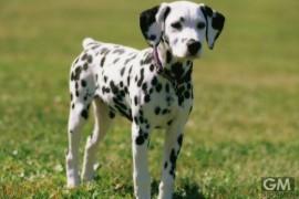 gigamen_Dog_Breeds_Names01