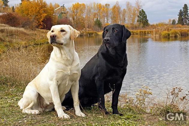 gigamen_Dog_Breeds_Names02