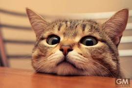 gigamen_Befriending_Strange_Cats