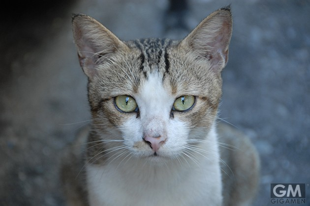 gigamen_Befriending_Strange_Cats02