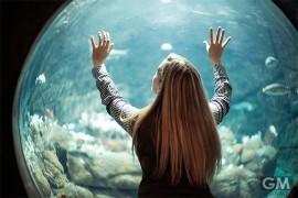 watching_fish01