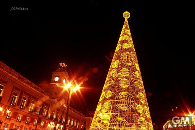 10-best-christmas-trees-6