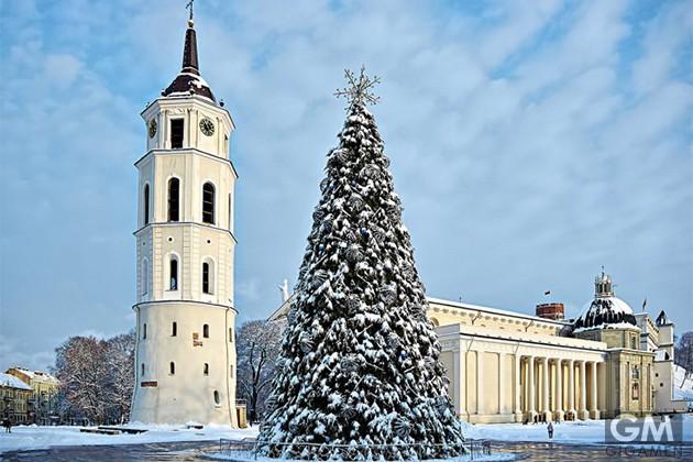 10-best-christmas-trees-9