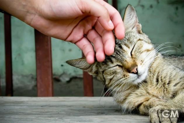 猫为什么发出咕噜咕噜的声音?