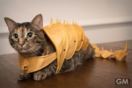 3d-print-cat-armor