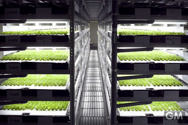 automated-farming-vegetable-factory-2
