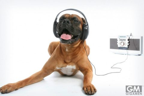 01_dogs_like_reggae_music